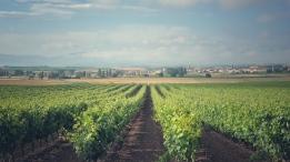 Wein in der Gegend