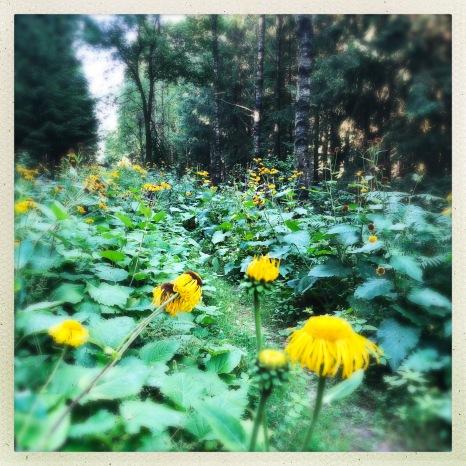 Reitweg im Stadtwald