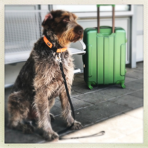 Uro wartet auf den Zug
