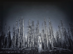 Auch Wald